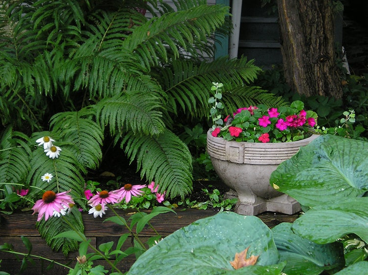 which garden plants grow well in shade