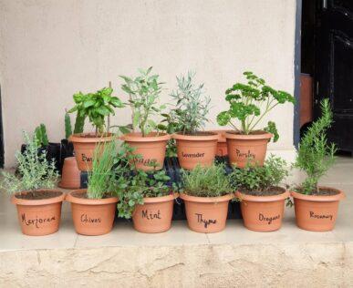 8 Effortless Herb Planter Box Ideas 1