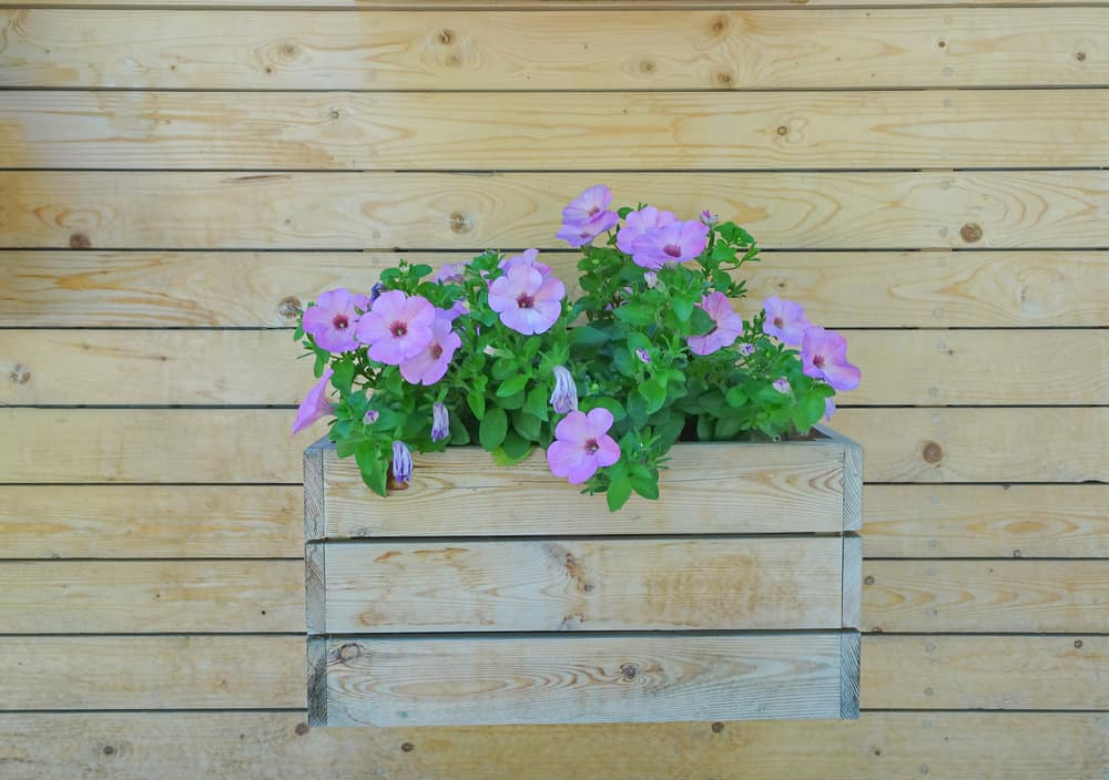 blooming wall flower box