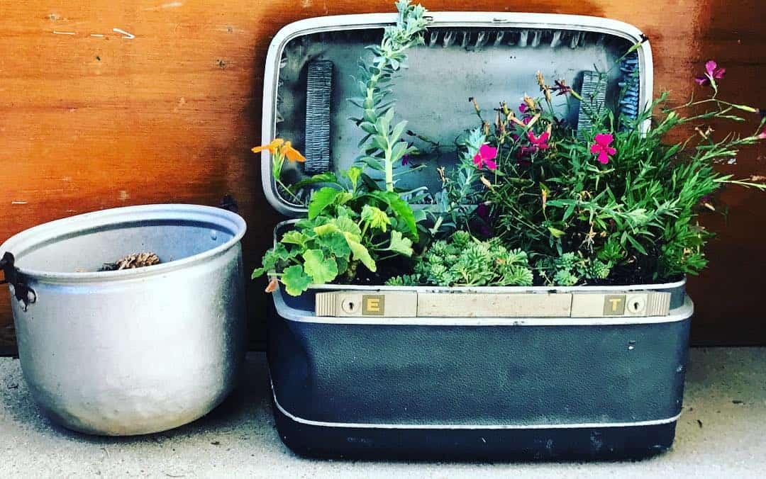 cheap planter box