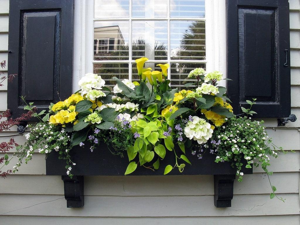 colour coded planter boxes