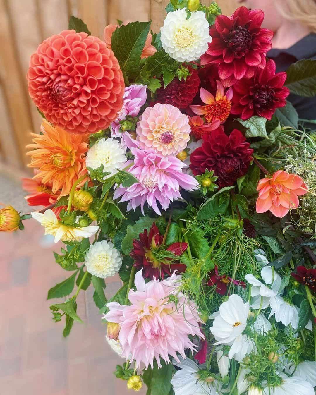 dahlias bouqet flowers