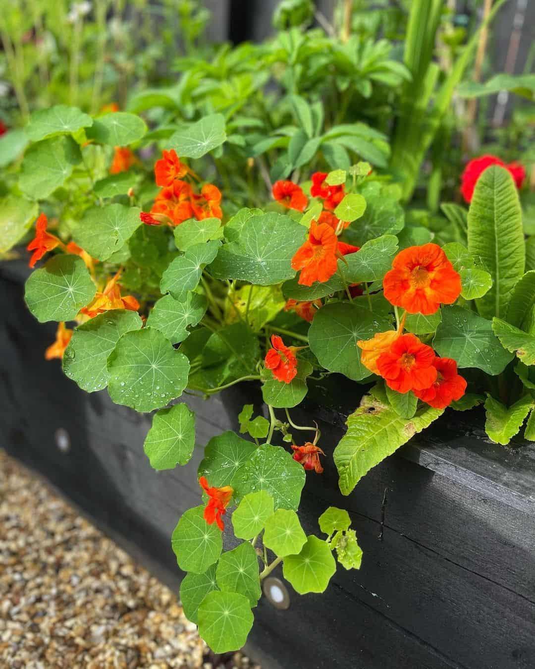 edible flower box