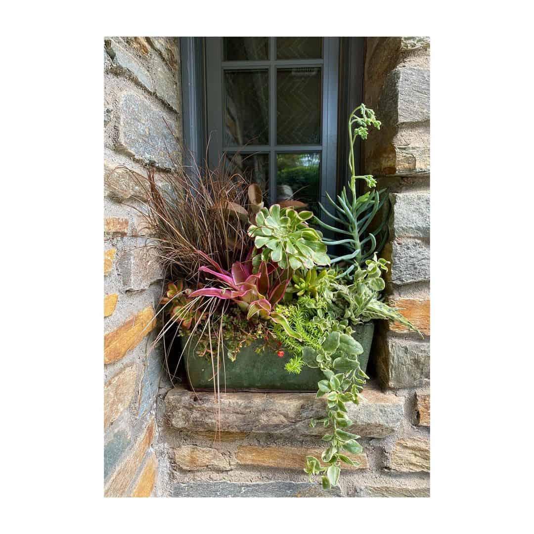 evergreen flower box