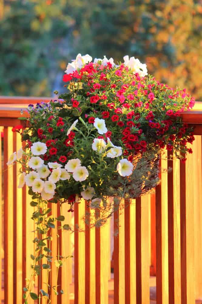 hanging flower box on deck rails