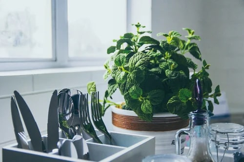 kitchen counter herbs