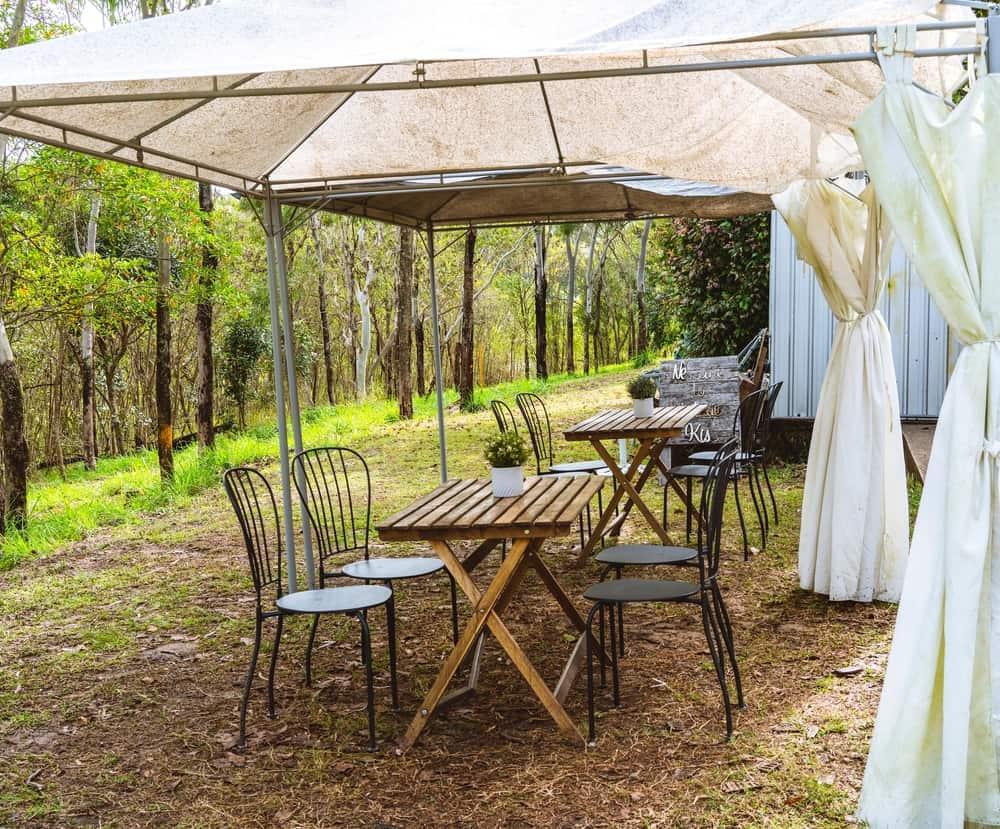 mildewed canopy