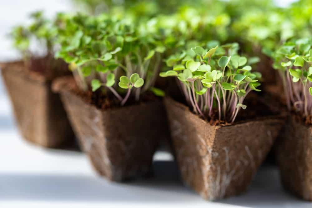 mini herb box