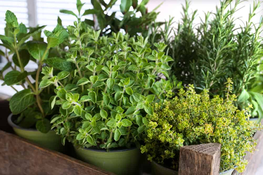 mixed herb container