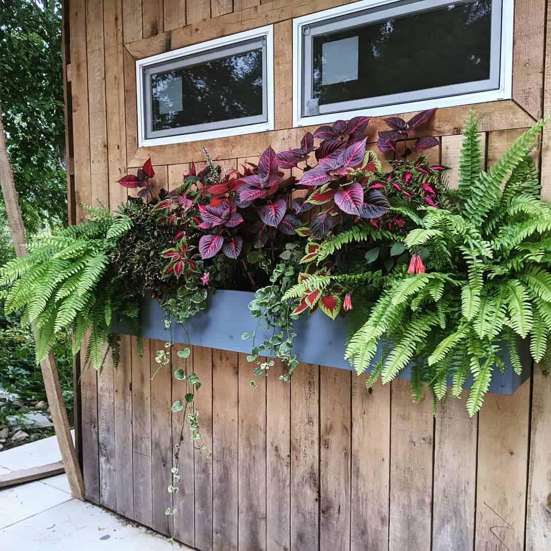 shade loving flower box