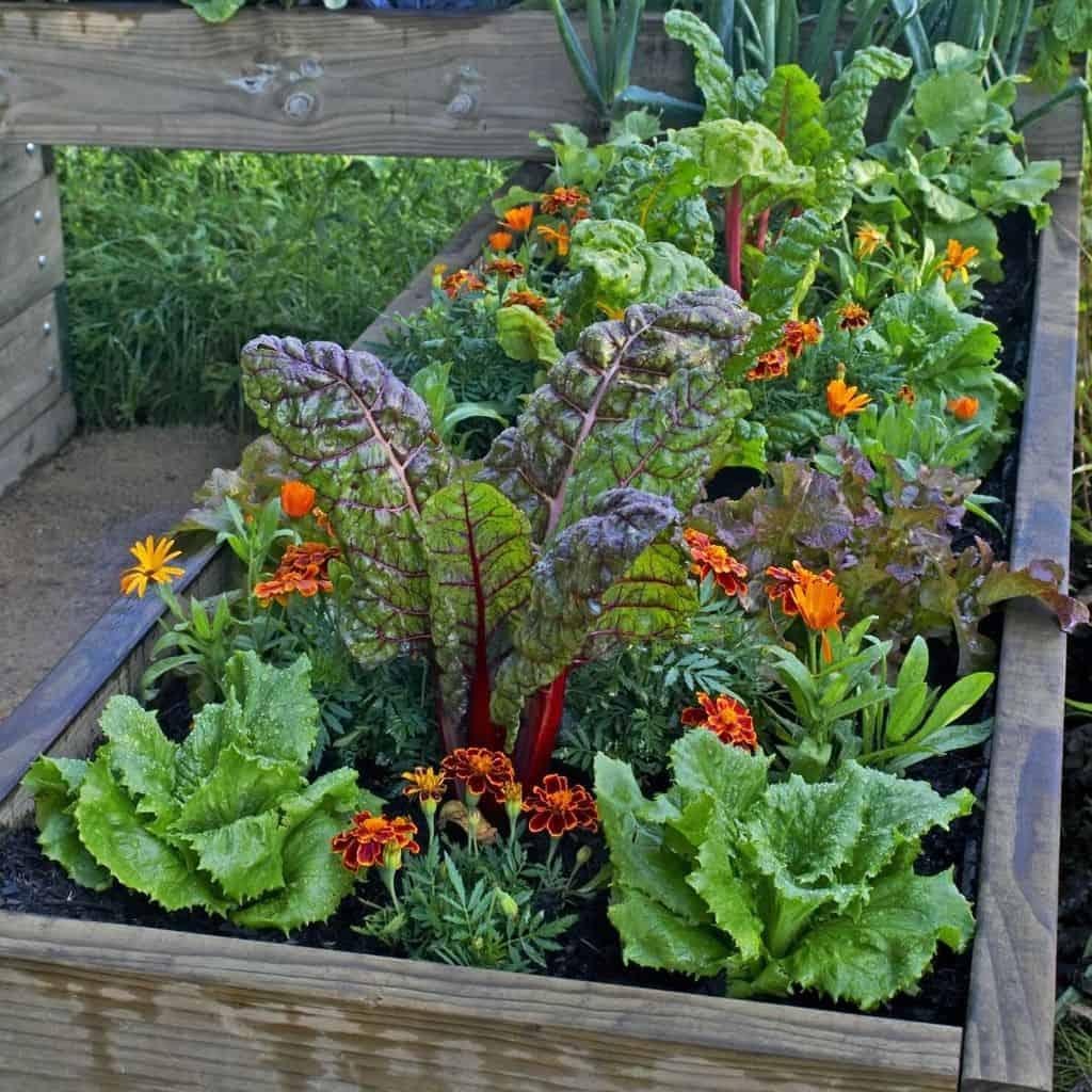 vegatable flower box