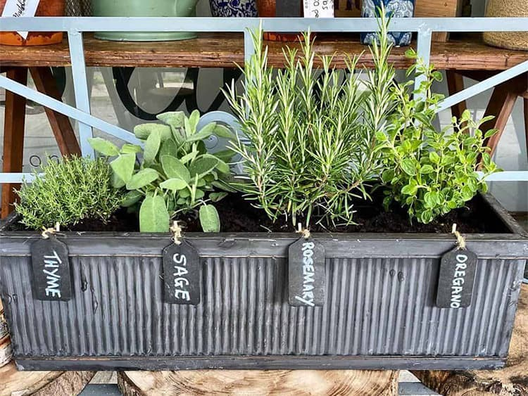 10 of the Best Herbs to Grow in a Planter Box 2