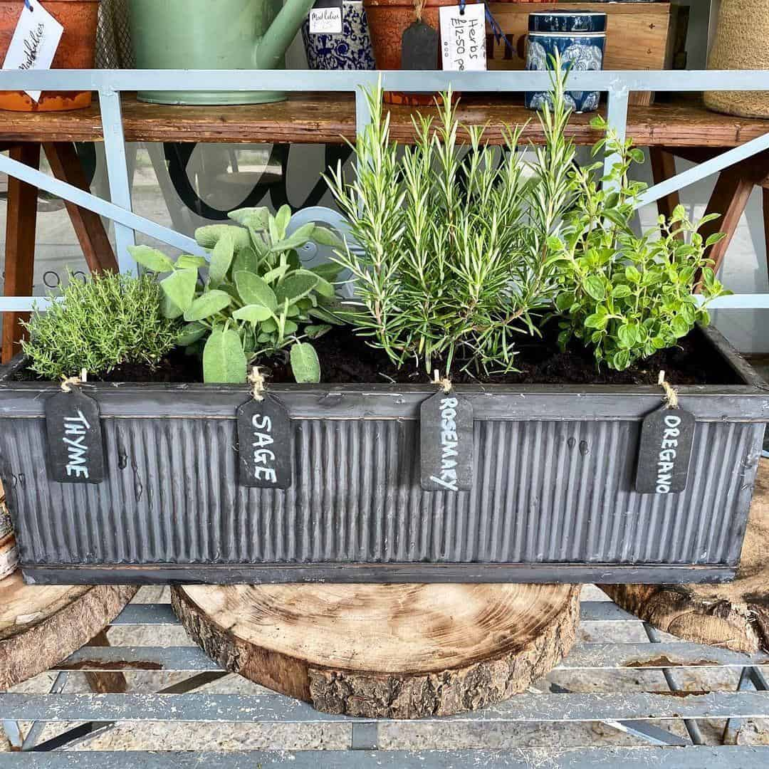 best herbs to grow in a planter box