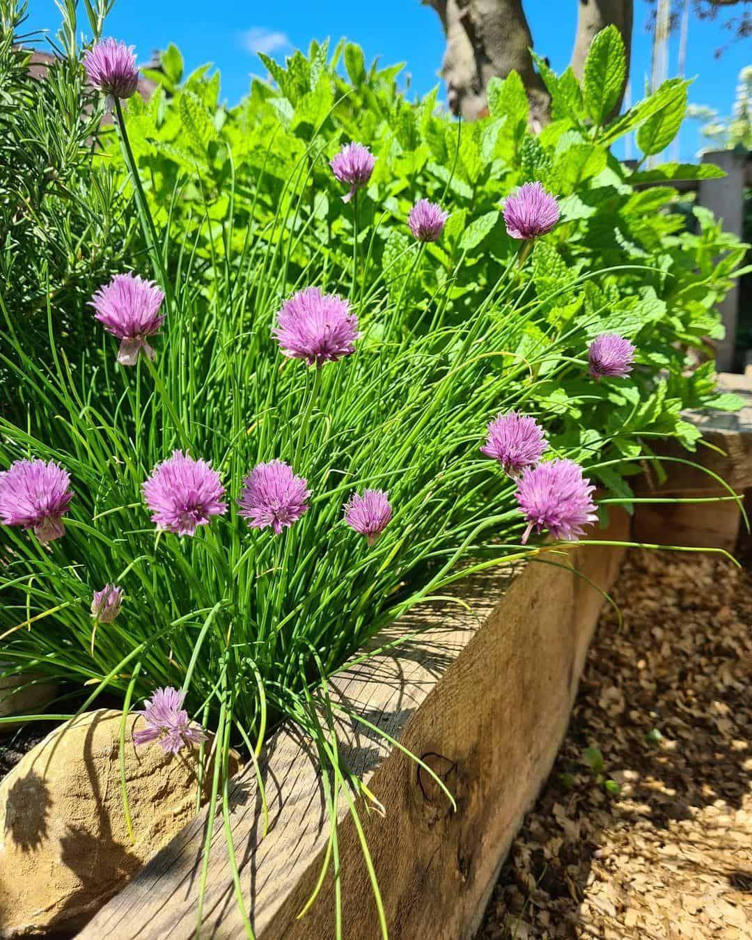 chimes planter box