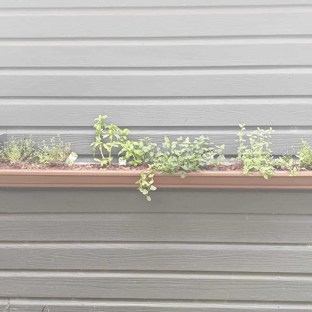 herb gutter planter garden