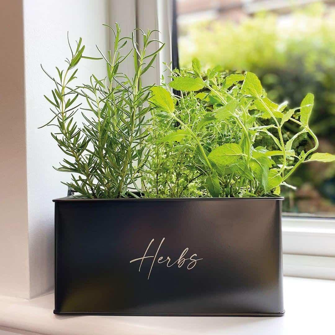 mint planter box