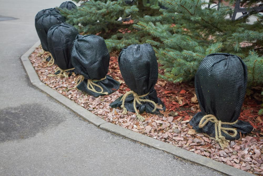 protecting plants from winter