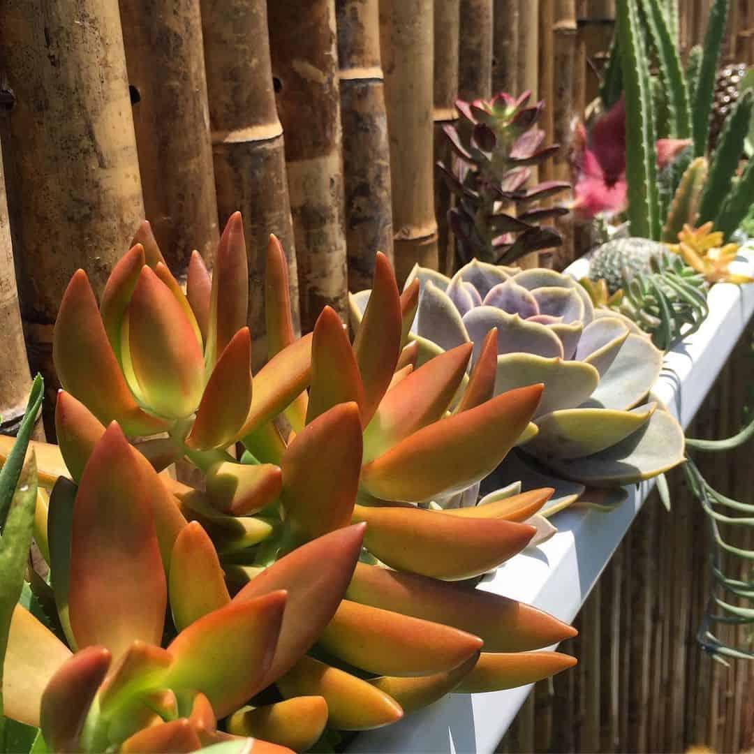 rain gutter planter with succulents