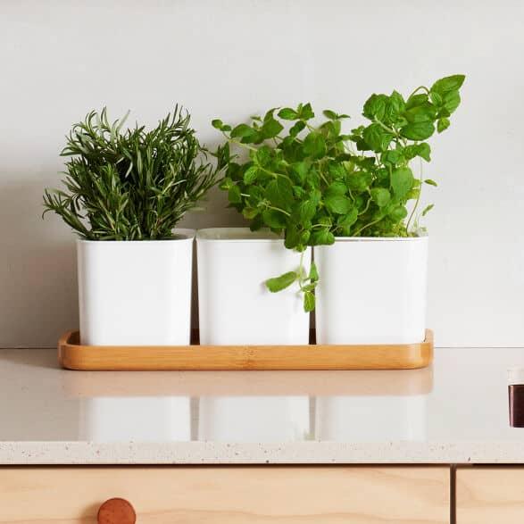 self-watering herb box